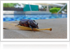 Tips to Keep Pests out of your Pool